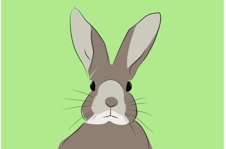 rabbitt_pg-01